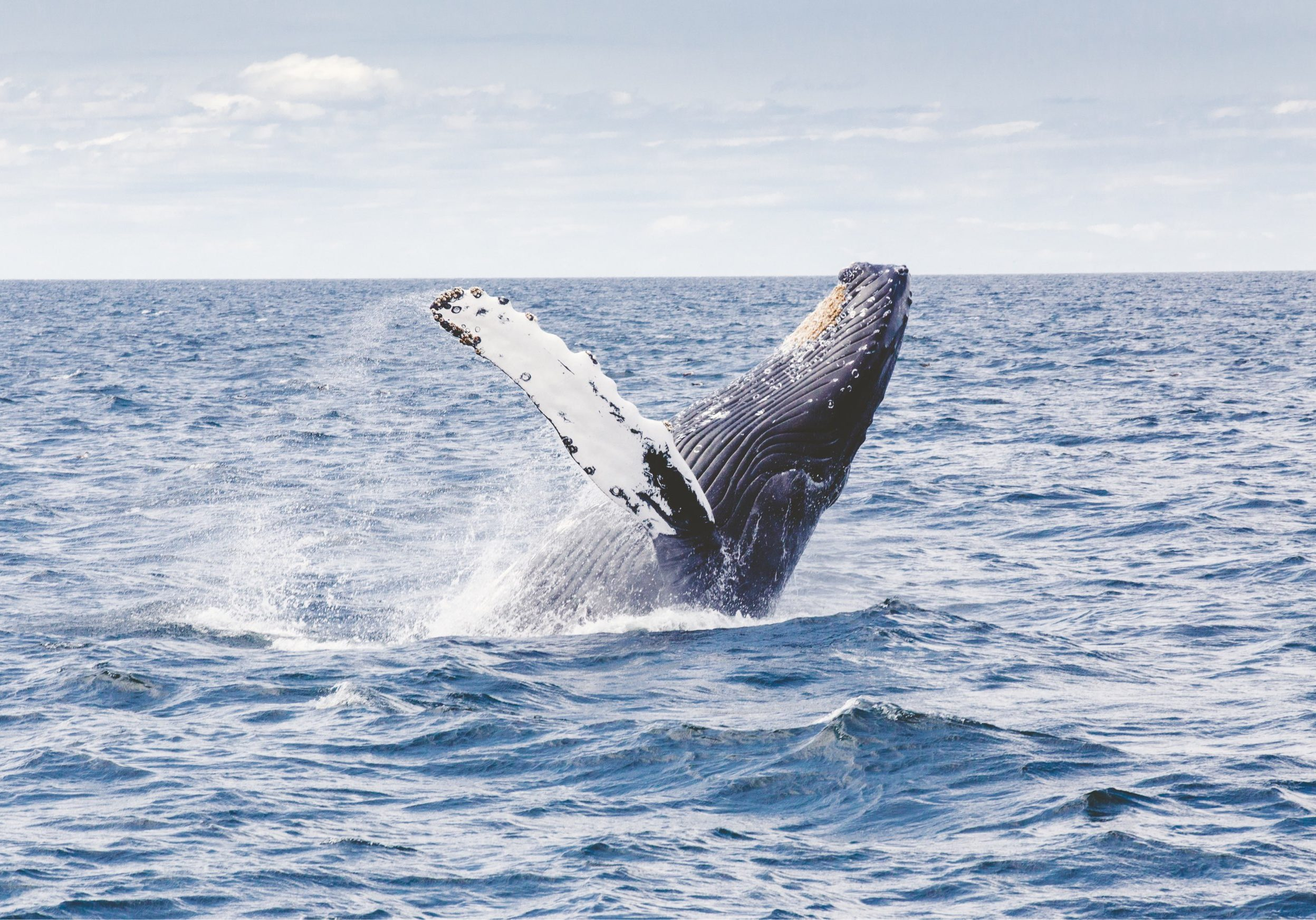 whale_small